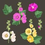 Установленные цветки и листья мальвы Дизайн лета флористический с цветками Собрание акварели зацветая для обоев, ткани Стоковые Фото
