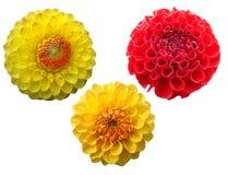 установленные цветки Стоковые Фотографии RF