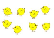 установленные цыпленоки иллюстрация штока