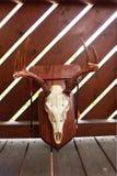 Установленный череп антилопы с рожками стоковое изображение rf