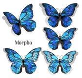 Установленное голубое morpho бабочек иллюстрация вектора