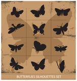 Установленные бабочки природы различные символические Стоковое фото RF