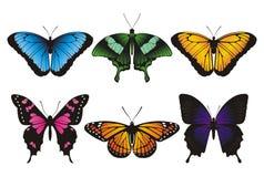 установленные бабочки Стоковые Фотографии RF