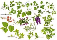 Установленные ветви весны зеленые Стоковое фото RF