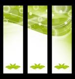 Установленные волнистые знамена природы с зелеными листьями Стоковое фото RF