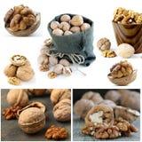 Установленные все и прерванные грецкие орехи стоковые изображения