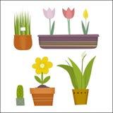 Установленные горшечные растения Иллюстрация штока