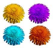 Установленные голубые желтые фиолетовые красные цветки, белизна изолировали предпосылку с путем клиппирования closeup Отсутствие  Стоковая Фотография RF