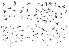 Установленные летящие птицы Стоковое Изображение