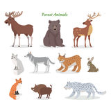 Установленные животные леса Характеры живой природы вектор иллюстрация штока