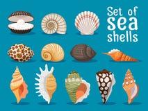 Установленные значки раковин моря плоские Стоковая Фотография RF