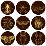 Установленные иконы насекомого иллюстрация штока