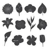 установленные иконы цветка Стоковая Фотография RF