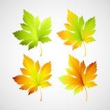 Установленные листья вектора падения для вашего дизайна Стоковое Изображение RF