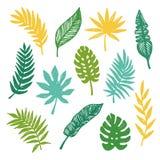 Установленные листья вектора тропические Стоковая Фотография