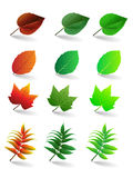 Установленные листья вектора иллюстрация вектора