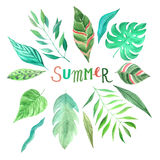 Установленные листья зеленого цвета лета акварели тропические иллюстрация штока