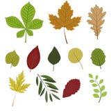 установленные листья осени Стоковое Изображение RF