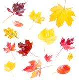 Установленные листья падения Стоковое Изображение