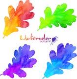 Установленные листья дуба цветов радуги покрашенные акварелью Стоковые Фотографии RF