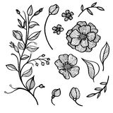 установленные листья цветков Стоковое фото RF