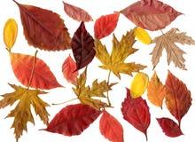Установленные листья Стоковое Фото