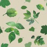 Установленные листья Стоковые Изображения RF
