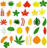 установленные листья Стоковые Фото