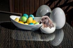 Установленные красочные сияющие пасхальные яйца и серый цвет и белизна покрасили керамический с зайчиком Стоковое фото RF