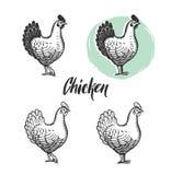 Установленные логотипы цыпленка Элементы мяса курицы и продукции яичек винтажные иллюстрация штока