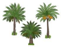 Установленные пальмы Стоковые Изображения