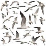 Установленные птицы изолированными стоковое фото rf