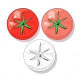Установленные реалистические томаты эскиза Еда завода Сельская ручная работа продуктов иллюстрация вектора