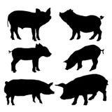 Установленные силуэты свиньи также вектор иллюстрации притяжки corel Стоковая Фотография