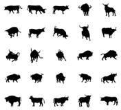 Установленные силуэты Bull Стоковое Изображение RF
