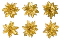 Установленные цветки, абстрактное флористическое украшение, золотое изолированное оформление Стоковые Фотографии RF