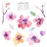Установленные цветки акварель иллюстрация вектора
