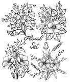 Установленные цветки вектора черно-белые флористическое собрание с листьями и цветками, годом сбора винограда притяжки руки Стоковая Фотография