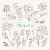 Установленные цветки нарисованные рукой винтажные Стоковые Изображения