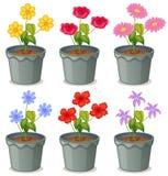 Установленные цветки Стоковая Фотография
