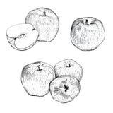Установленные эскизы яблока чернил Стоковые Фотографии RF