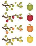 установленные яблоки иллюстрация вектора