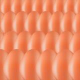 установленные яичка Стоковое Фото