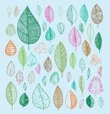 установленные doodles листьев Иллюстрация вектора нарисованная рукой Стоковая Фотография