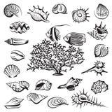 установленные seashells Стоковые Фото