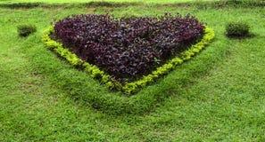 Установленный в форме сердц цветок Стоковое фото RF
