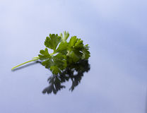 Установленный свежий овощ с зелеными лист Стоковая Фотография