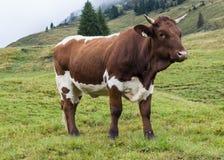 Устрашайте в горах Австрии Стоковая Фотография