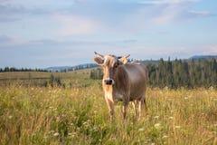 Устрашайте крупный план пасите на луге травы лета стоковое изображение
