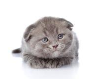 Устрашенный великобританский котенок shorthair смотря прочь на wh Стоковое Изображение